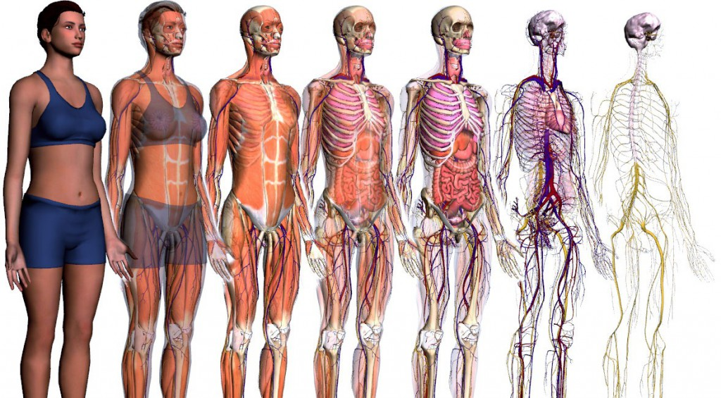 Anatomy degree online 9956945 - follow4more.info